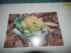 FROG LOVERS DECOR