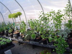 PERENNIALS-buy from a local grower-ALWAYS SAVE THE TAX Kawartha Lakes Peterborough Area image 5