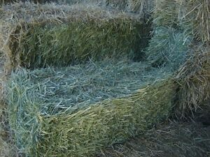 Grass Hay - Excellent for horses