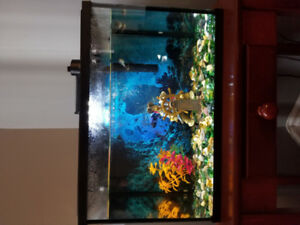 5G fish tank with 1 betta and 3 small other fish