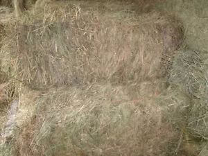 hay for livestock cattle and horse