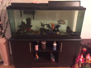 Big Fish Tank with Cabinet, Filter, and Fish included
