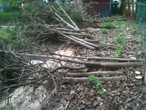 Free cut down cedar trees apx 20 small ones