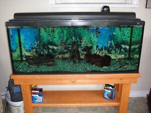 50+ Gal Aquarium for sale