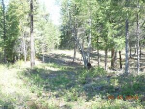 6 acres for sale Winlaw, Slocan Valley