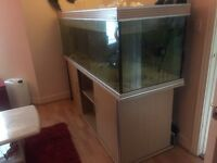 6foot fishtank