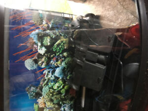 29 Gallon Fish Tank