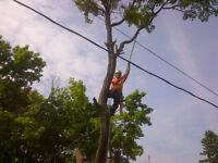 Bayridge Tree Service For Your Total Tree Care