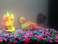 Tropical fish for sale