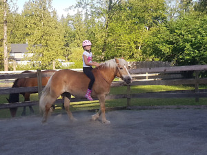 Kid / Beginner Safe Mare