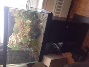 Fish tank + stand + accessories
