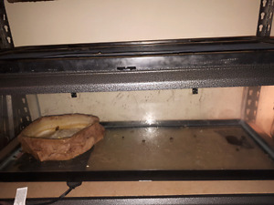 20 gallon terrarium and aquarium for sale
