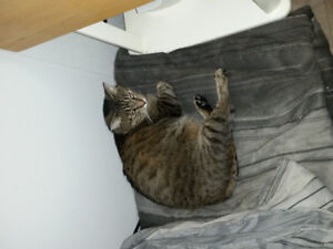 3 YEAR OLD NEUTURED MALE CAT TO GIVE AWAY.