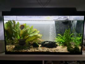 Tetra 105L Fish Tank