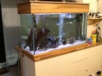 FOR SALE FISH TANK