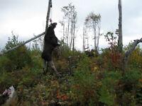 roulotte de chasse avec territoire a la tuque