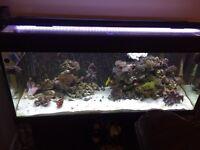 Full marine aquarium fish tank set up