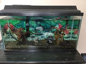 Aquarium de 36g avec meuble
