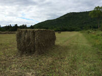 Quality second cut hay for sale 2015 60$ + transport