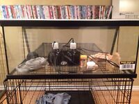 Bearded dragon tank with accessories