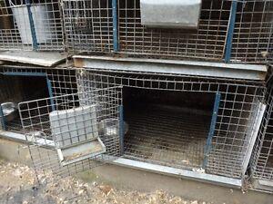 cage à lapin extérieur
