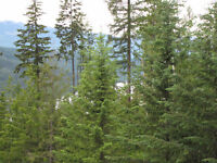 2 x 10 Acre Lots 5 Minutes From Kootenay Lake ( East Shore)
