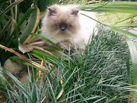 atwater market griffintown old montreal cat sitter care chat