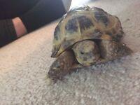 Tortoise + tank