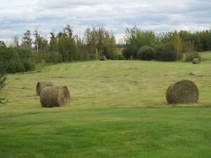 10 Hay Bales for sale.  6 miles north of Tofield AB