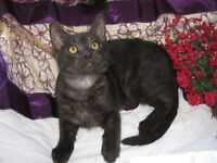 *** Neutered Male Kittens (Vaccinated and Healthy!) ***