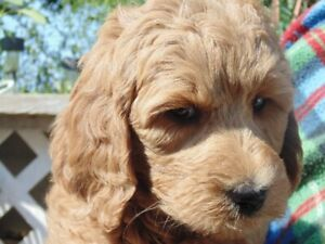 Adopt Dogs & Puppies Locally in London | Pets | Kijiji