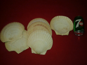 Coquille st jacques BBQ