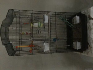 2 CONURE PARROTS and Accesories
