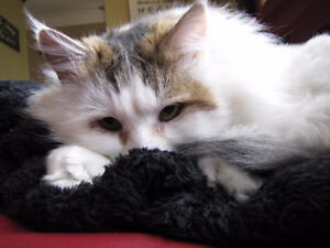 FREE Affectionate Cat Great with Kids and Dogs