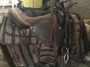 Quarter Horse- Registered Appendix American chestnut gelding Peterborough Peterborough Area image 2