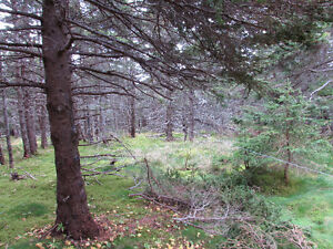 54 POINT ROAD, CHAPEL'S COVE…PRIVATE LOT.. St. John's Newfoundland image 14