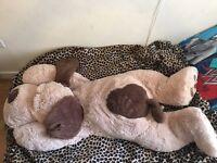 Giant dog teddy