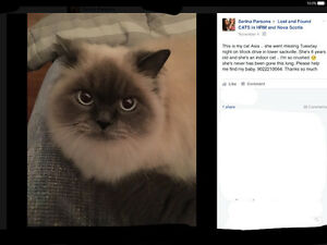 Cat lost from lower Sackville, may have travelled