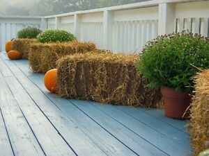 Perfect garden mulch - large heavy bales of golden straw! Cambridge Kitchener Area image 7