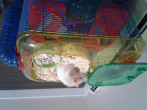 Hamster along with cage for rehoming