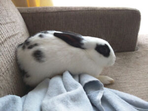 Selling 3 2months old bunnies