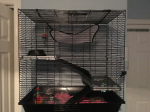 Beautiful baby rats (female) cage/bedding/food included