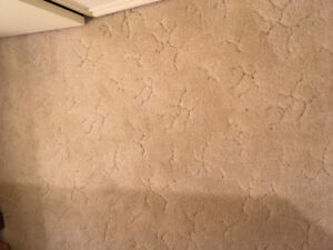 Salvage Carpets, baseboards, and trim