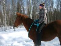 Recherche emploi avec les chevaux