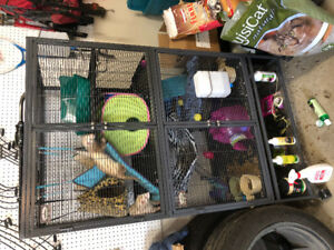 2 ferrets and cage and all accessories