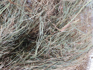 Hay bales meadow brome and Timothy mix
