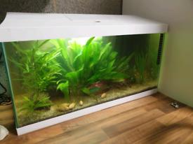 White aquael 60 aquarium fish tank