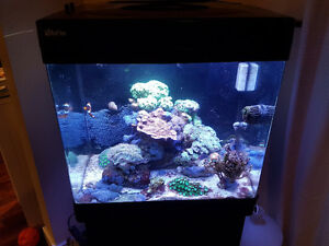 Complete Salt Water Reef Tank for Sale - RedSea Max 130D