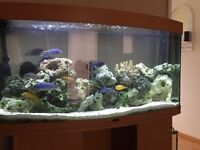 Juwel 4ft 260 lt bow fronted fish tank