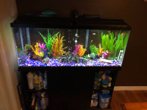 50g Aquarium PRICED TO GO! STAND and MORE INCLUDED!!!
